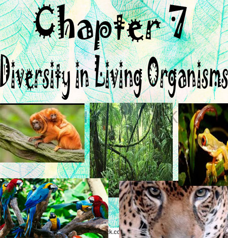 NCERT/CBSE Notes Class 9/Chapter 7/ Diversity in Living Organisms