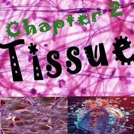 NCERT/CBSE Notes/Chapter 2/Tissue
